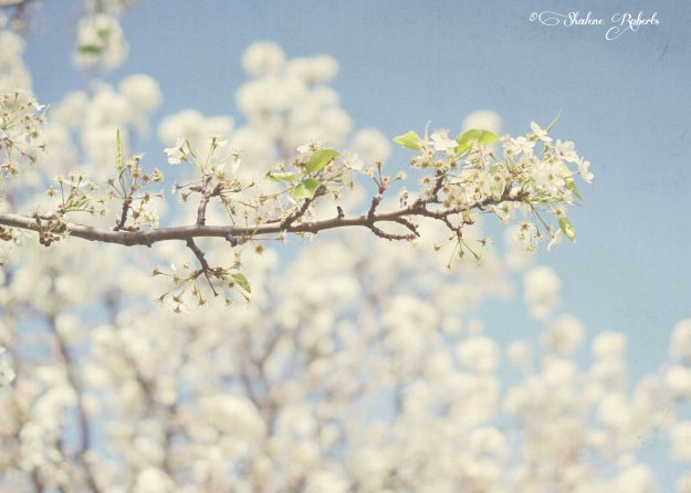 Spring | ©Shalene Roberts, Faith&Composition