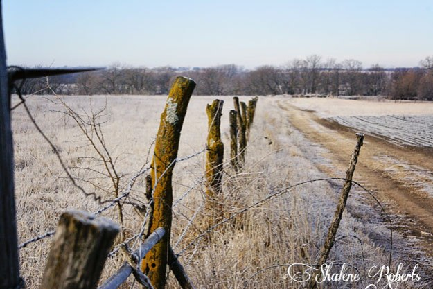 Farm Fencepost | Faith & Composition