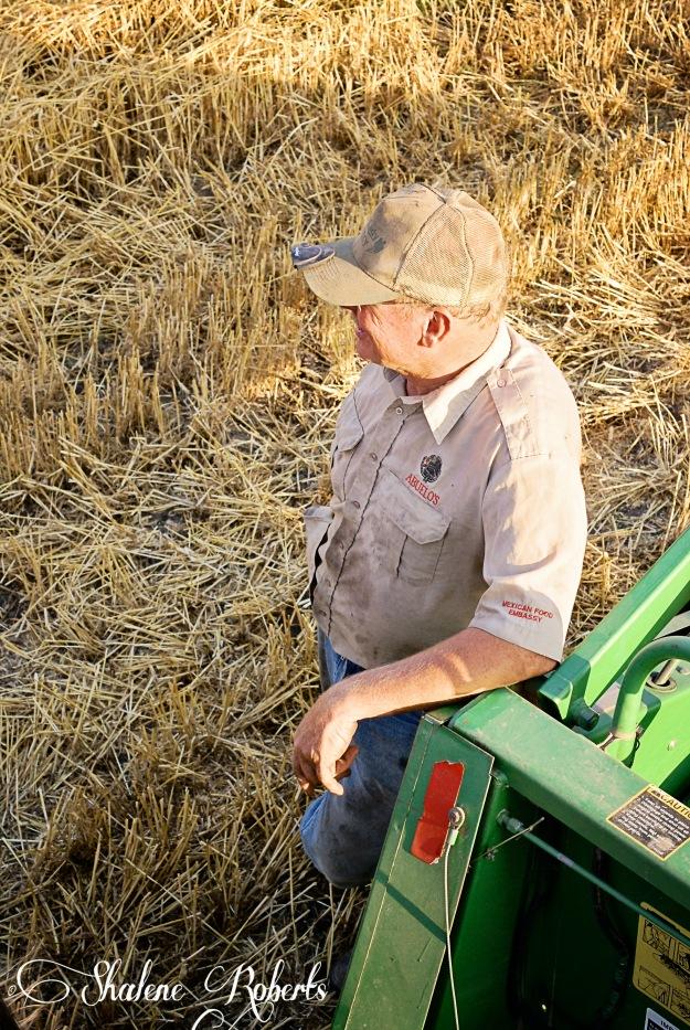 A Kansas Wheat Harvest | Faith and Composition