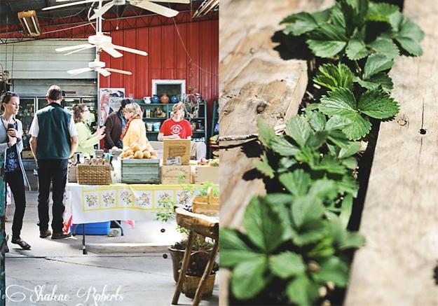 Elizabeth Anna's Old World Garden, Fort Worth, TX