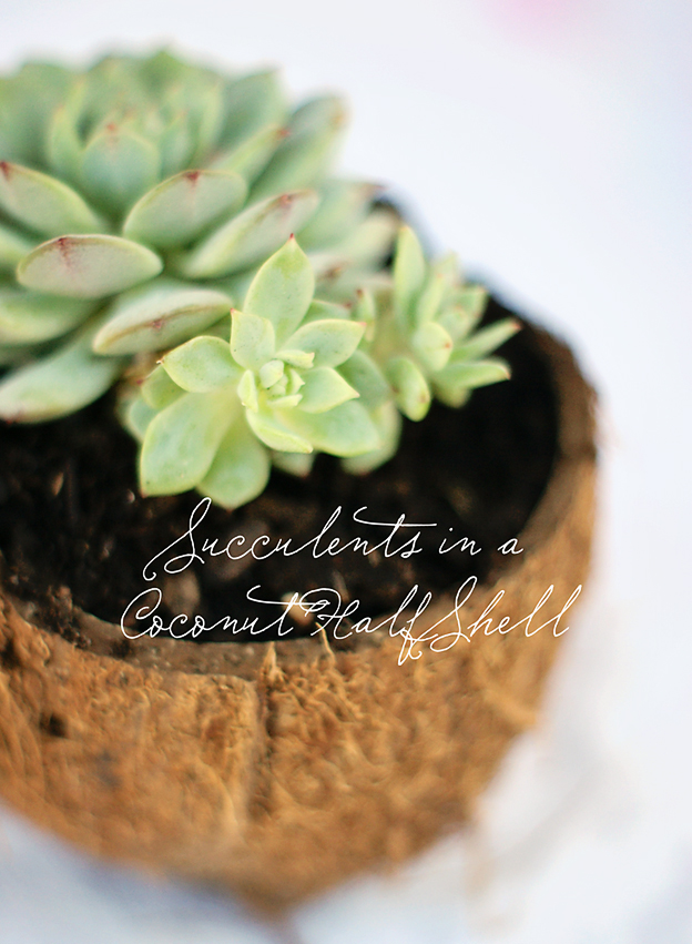 Succulents in a Coconut Half Shell | Faith and Composition